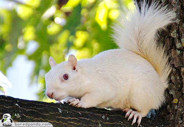 animales albinos - photo #46