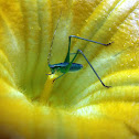 katydid and squash flower