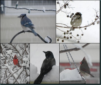 birds collage