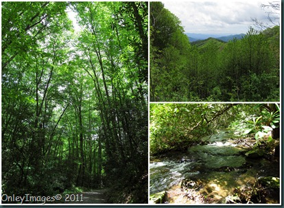 GSMNP collage1