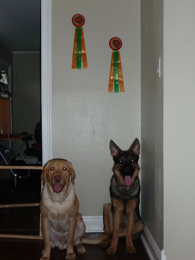 Toyota Albany Ny >> Dogs! How many do you have? - Toyota FJ Cruiser Forum