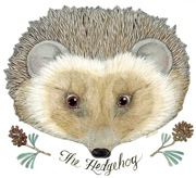 the_hedgehog
