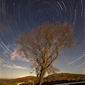 High Newton tree trail by Mark Airey - Landscapes Starscapes ( tree, stars, d7000, long exposure, nikon, trails, night sky, starstax, sigma 10-20mm, startrails )