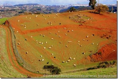 1655 Montaña Pajarito-Valleseco