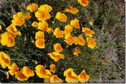 2506 Camino de la lava(Amapola California)