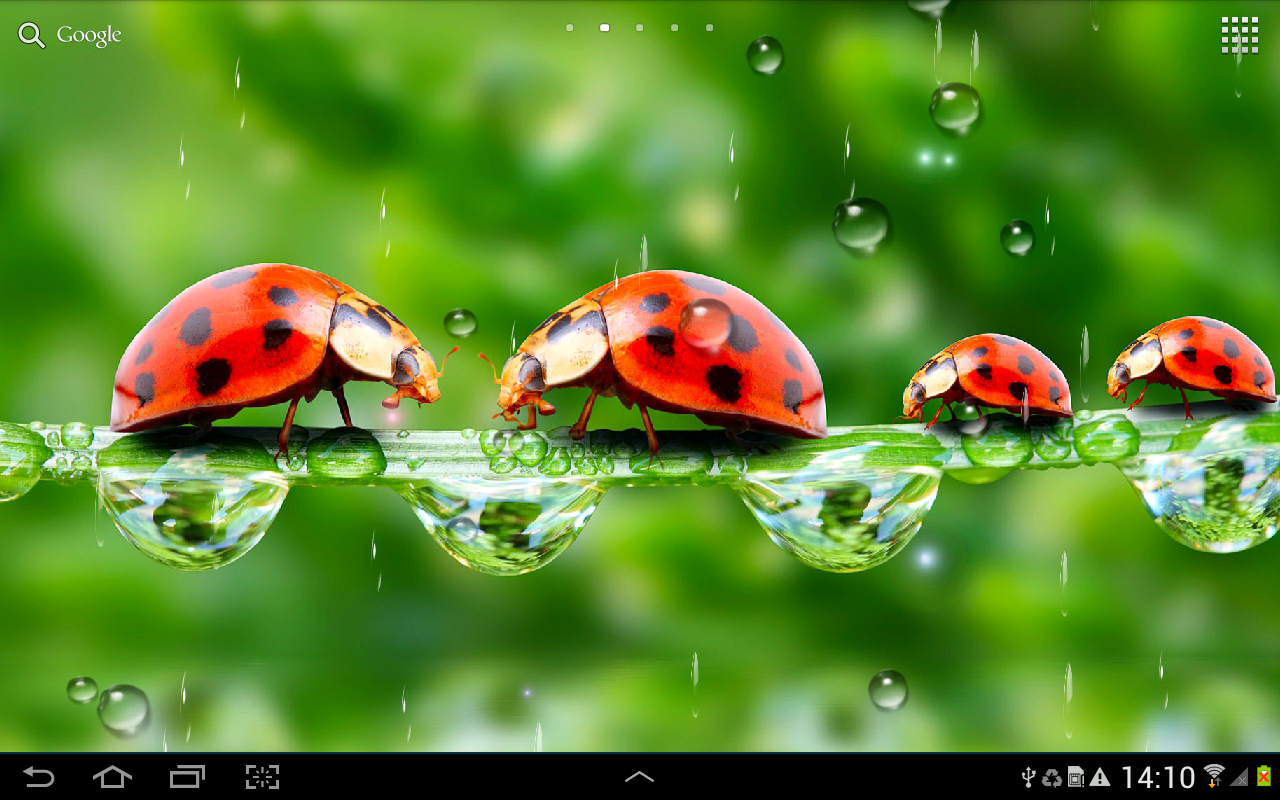 Rain live wallpaper android apps on google play for Live wallpapers