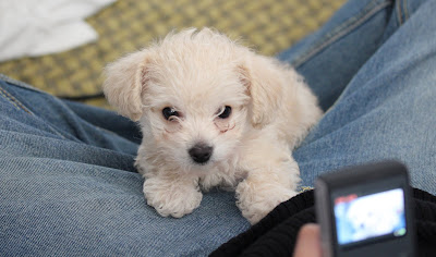 photo of a white puppy