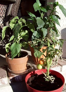 Extend Your Growing Season with a Container Garden