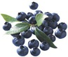 blueberry_m_gren_1204537872_983796