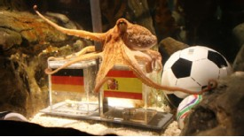 spanish-pm-to-protect-paul-the-octopus-psychic-octopus-to-predict-world-cup-champions-2010