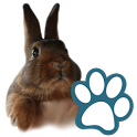 Rabbits icon