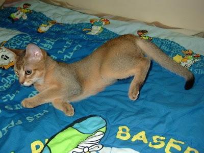누워있는 고양이 바토 [고양이,고양이키우기,고양이집사,반려묘,cat]