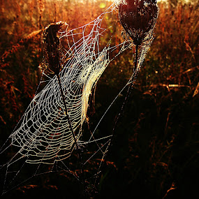 by Andrea Šipuš - Nature Up Close Webs