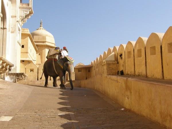 Obiective turistice India: elefanti din Amber Fort Jaipur