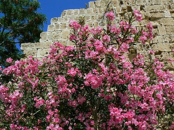Obiective turistice Cipru de Nord: castelul Kyrenia.JPG
