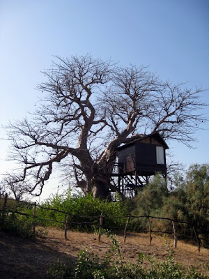Tree house at Les Collines de Niassam resort in Senegal