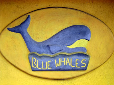 Blue Whales Bar in Nice France