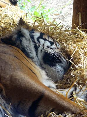 London zoo (Regent's Park) ; un moment de détente agréable à Londres 3