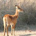 Wildlife of Kasungu National Park, Malawi