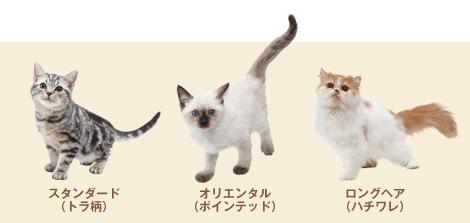 Nintendogs Cats Pinscher Nain