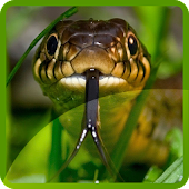 Snakes Wallpapers
