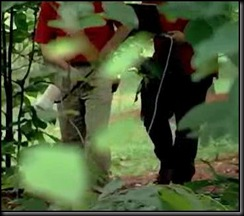 BraconidWasp-CadaverScent-Forensics 8