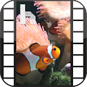 Ocean Fish Video Homescreen