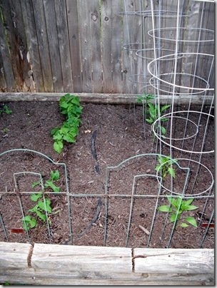 Green Beans, Peppers
