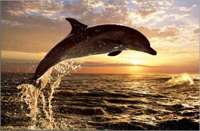 dolphin_sunset