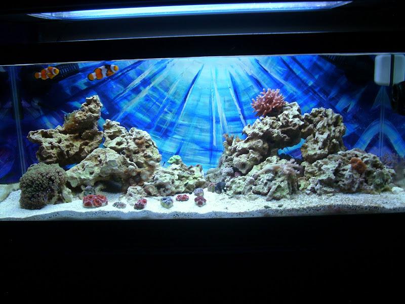 ReefCleaners Rock Aquascaping Contest - Aquarium Forum