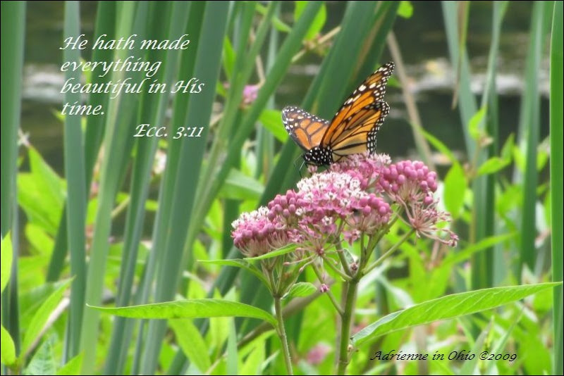 monarch butterfly with scripture quote- photo by Adrienne Zwart