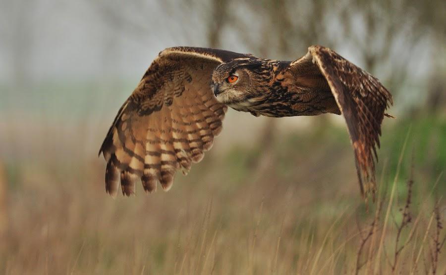 flight by Alfons Paesen - Animals Birds ( , bird, fly, flight )