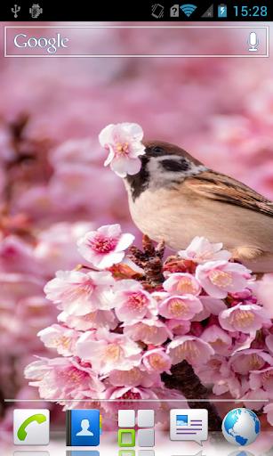 Sparrows HD Live Wallpaper