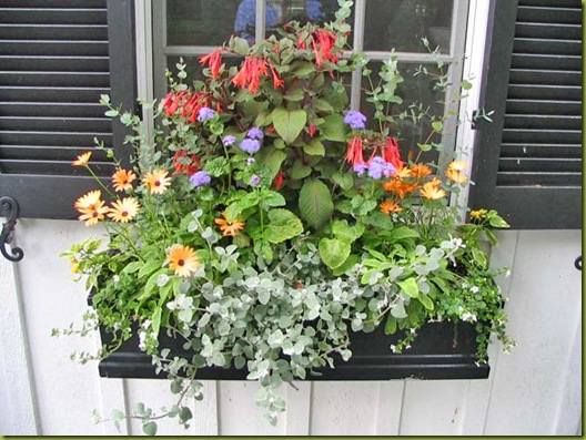 windowbox_bg