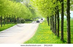 Spring Green Trees