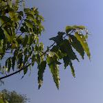 (00)20032011601.jpg