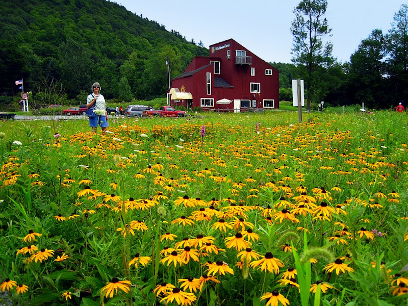 james monique s rv travels 08 09 vermont wildflower farm
