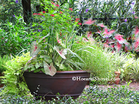 Container Gardening for Florida