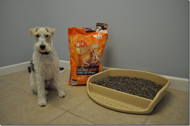 Dog Litter Decor And The Dog