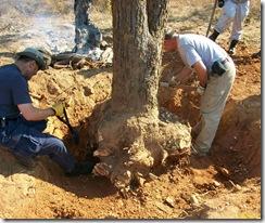 tree felling 4