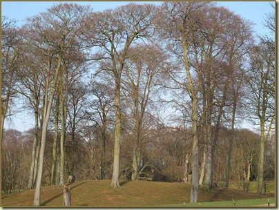 Trees by Dunham Golf Course