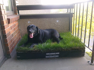 Diy Outdoor Doggy Potty Patch For The 000hlala