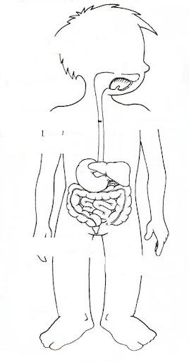 Cuerpo Humano Dibujos Para Completar Y Colorear