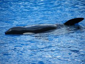 090 - Espectáculo de las orcas.JPG