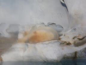 077 - El oso polar.JPG
