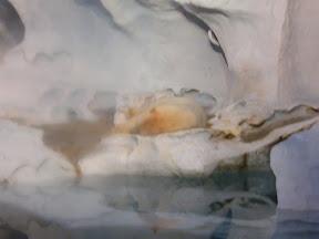 078 - El oso polar.JPG