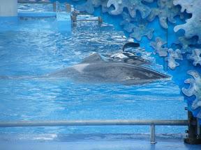 081 - Espectáculo de las orcas.JPG