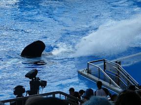 116 - Espectáculo de las orcas.JPG