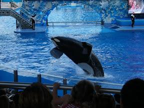 117 - Espectáculo de las orcas.JPG