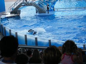 119 - Espectáculo de las orcas.JPG